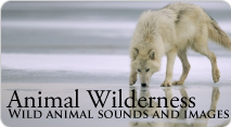 Animal Wilderness quick pack image